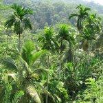 inside the rain forest