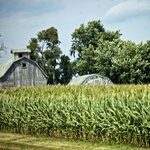 Barn and corn fields on West Prairie Tour