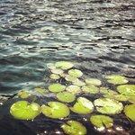 Algas en la laguna 1