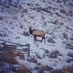 Beautiful elk on our tour