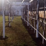 Outside trellis - perfect for a spring wedding!
