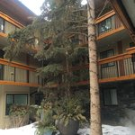 beautiful coniferous tree in courtyard by the pools.