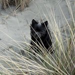 My dog hiding by one of the dunes