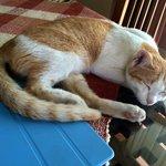 Bill's Katze - einfach Süss