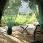 a tented jungle hut.