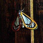 Schmetterling an unserer Türe