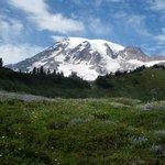 mountain bloom