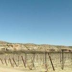Verde Valley Wine Trail Foto