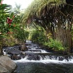 Beautiful Tabacon Hot Springs