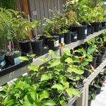 Buyers rack for local plants