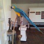 The resident macaw at Anantara Hua Hin