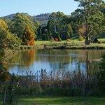 Founders Lake at The Tasmanian Arboretum