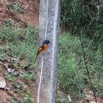 birds at homestay