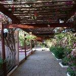 Photo of LTI - Pyramisa Isis Island Resort & Spa