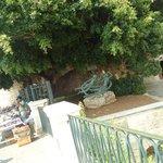 Fonte Aretusa em Ortigia