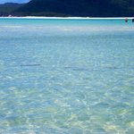 Whitehaven Beach - Family of Stingrays