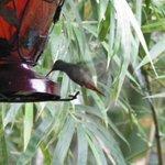 Hummingbird feeding while you eat your breakfast