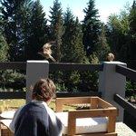 Mi hijo jugando en el balcón con las mascotas locales