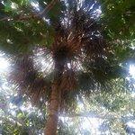 Lush overhead canopy