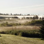 Summer mist over our 25 acres