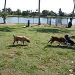 Mackle Park - Canine Cove
