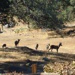 Wildlife outside the retreat