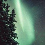 Aurora dancing in the trees in Wiseman Alaska.