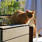 Romeo, the house cat