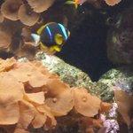 Cute, tropical fish!