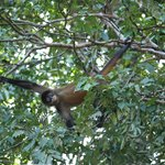 Monkey along the canal