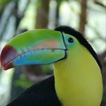 Toucan, up close and personal
