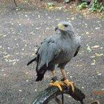 Aguila recuperada