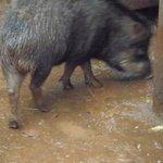 Animal rescatado