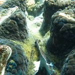 giant clams - amazing!