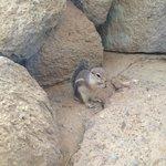 Cute little chipmunks!  Ground hogs too