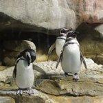 Penguins at the Shedd