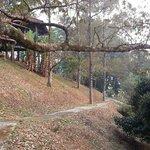 Dusun walk.