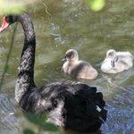 Denmarks Bird Zoo