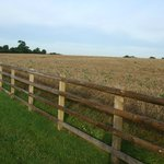 Arable field on the side of the long drive