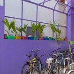 The hostel's bike parking