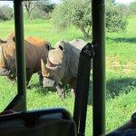 the 2 rhinos