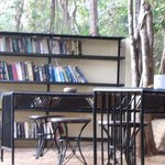 The Banyan Tree Library
