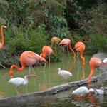 до фламинго подать рукой