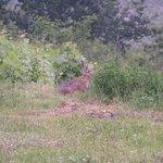 Notre voisin le lièvre