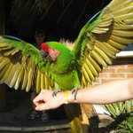 a resident parrot on a friend's arm in front of the resort