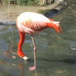 Beautiful Flamingo - colors so vibrant.