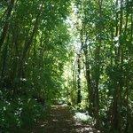 un des sentiers de promenade de notre parc de 11 hectares