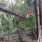 way to tree Machaan