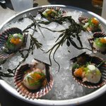 Ponzu Sashimi Sea Scallops with wasabi aioli and wakame salad