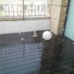 Rain and open electricity wires - bad combination